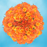 200 Stems of Dark Orange, Amber Roses