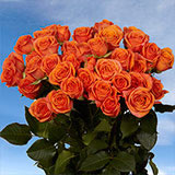 200 Stems of Orange Spray Roses 700 Blooms                                                              For Delivery to Alaska