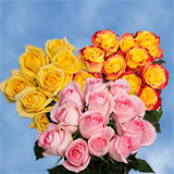 14 Dozen Roses Your Choice of Up to 8 Colors