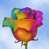 100 Your Choice Rainbow Roses                                                              For Delivery to Connecticut