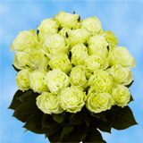 24  Stems of Green Roses