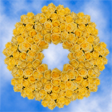 250 Stems of Bright Yellow Roses