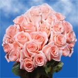 75 X Long Stems of Peachy Pink, Engagement Roses                                                              For Delivery to Oregon