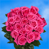 75 X Long Stems of Bright Hot Pink Roses