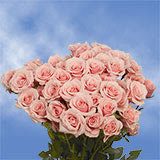 200 Stems of Pink Spray Roses 700 Blooms