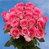 75 X Long Stems of Deep Pink, Priceless Roses