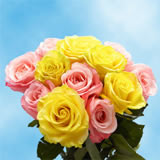 50 Stems of Roses: 25 Yellow and Pink                                                              For Delivery to Connecticut