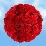 100 Stems of Red, Freedom Roses