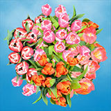 60 Stems of Assorted Color Tulips
