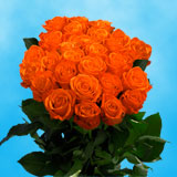 75 X Long Stems of Orange Crush Roses