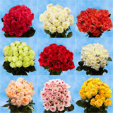 250 Assorted Colors of Roses Plus 250 Red Roses