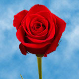125 Super Premium Stems of  Premium Red, Freedom Roses                                                              For Delivery to District_Of_Columbia