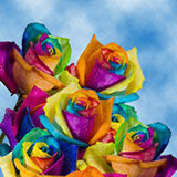 200 Stems of Multi-Color Rainbow Roses