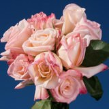 50 Stems of Creamy White with Light Pink Tips, New Vogue Roses