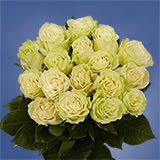 50  Green Roses