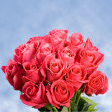 50 Stems of Deep Hot Pink, Hot Lady Roses