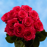 12 Stems of Hot Pink Roses                                                              For Delivery to Oklahoma