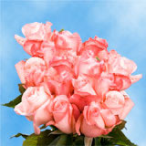 50 Stems of Light Pink, Livia Roses                                                              For Delivery to Utah