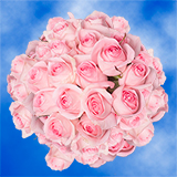 100 Stems of Soft Light Pink Roses