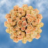 100 Stems of Peach, High and Arena Roses                                                              For Delivery to Oregon