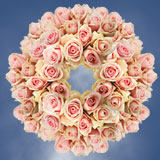 250 Stems of Light Pink/Peach, Fenice Roses