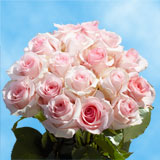 50 Stems of Light Pink, Nena Roses                                                              For Delivery to Alaska