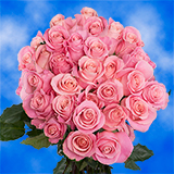 75 X Long Stems of Soft Pink Roses