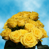 75 X Long Stems of Light Yellow Ochre, Sonrisa Roses