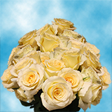 75 X Long Stems of Yellow Timeless Roses