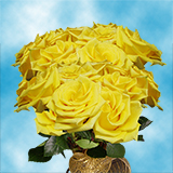 75 X Long Stems of Yellow Coral Roses