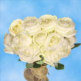 75 X Long Stems of White, Proud Roses