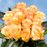 75 X Long Stems of Yellow With Red Tips, Latin Beauty Roses                                                              For Delivery to Mississippi