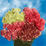 300 Stems of Novelty Carnations                                                              For Delivery to Iowa