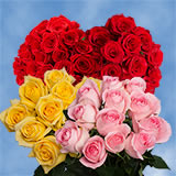 150 Stems of X Long Roses 75 Red & 75 Three Colors
