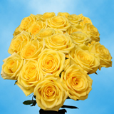 75 X Long Stems of Bright Yellow, Gold Strike Roses