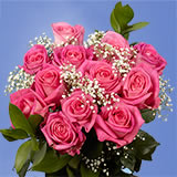 3 Dozen Pink Roses                                                              For Delivery to Colorado