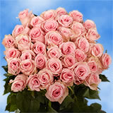 50 Pink Next Day Roses