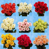 Choose Your Quantity of One Dozen Roses