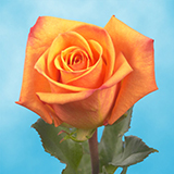 Dark Orange Roses Choose Your Quantity From 50 to 250  Amber Roses