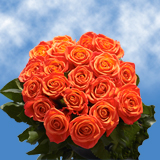 50 Stems of Orange, Valentine's Day Roses