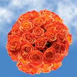 150 Stems of Orange, Valentine's Day Roses
