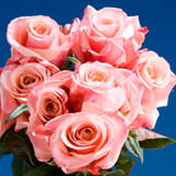 50 Stems of Pink, Exciting Roses                                                              For Delivery to Minnesota