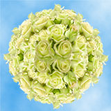 100 Stems of Creamy Green, Jade Roses                                                              For Delivery to South_Dakota