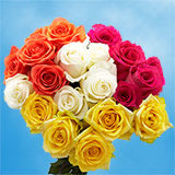 75 X Long Stems of Assorted Colors Roses