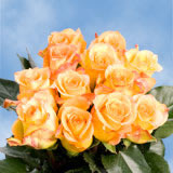 50 Stems of Yellow With Red Tips, Latin Beauty Roses