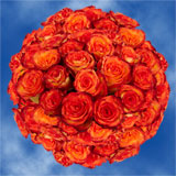 100 Stems of Yellow with Orange, High & Magic Roses