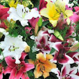 20 Stems of Assorted Color Oriental Lilies 80 Blooms