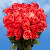 75 X Long Stems of Bright Coral, High & Blooming Roses                                                              For Delivery to Massachusetts
