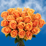 50 Stems of Peach, Cuenca Valentine's Day Roses