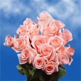 50 Stems of Peachy Pink, Engagement Roses